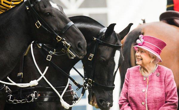 cavalo rainha da inglaterra elisabeth ii