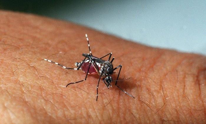 Você pode ter zika sem saber: só 1 em cada 5 pessoas manifesta sintomas