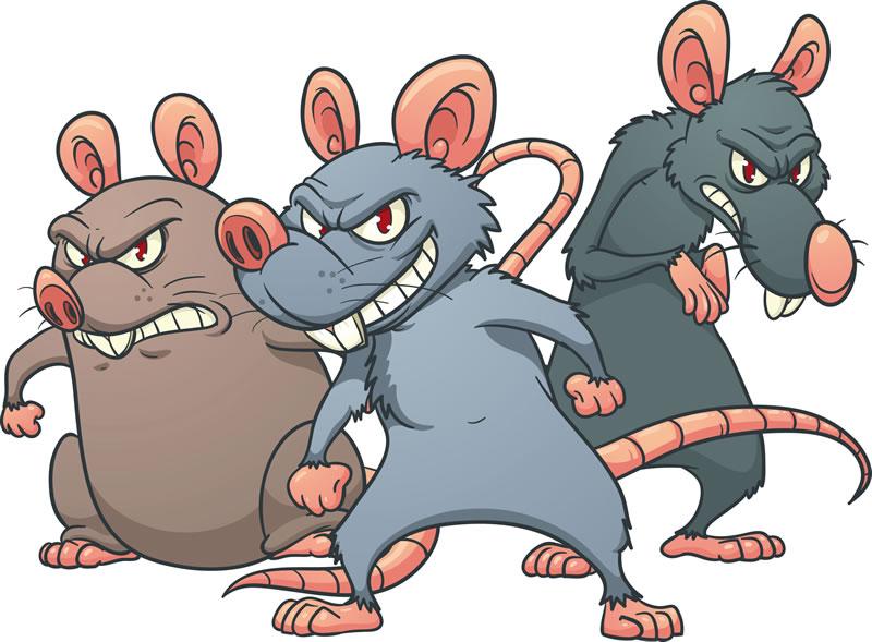 Infestação de ratos no condomínio: o que fazer