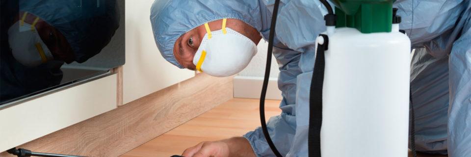 Técnicos especializados no controle de insetos e ratos, 24 horas.