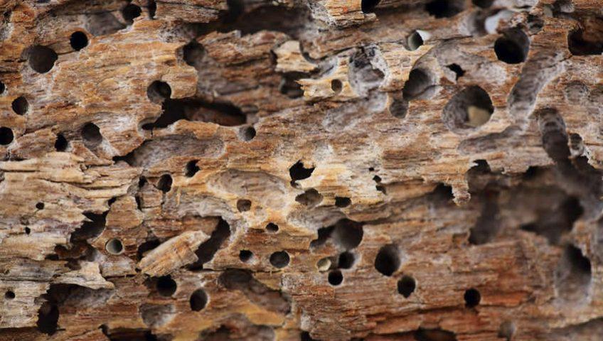 Como acabar com cupim na madeira