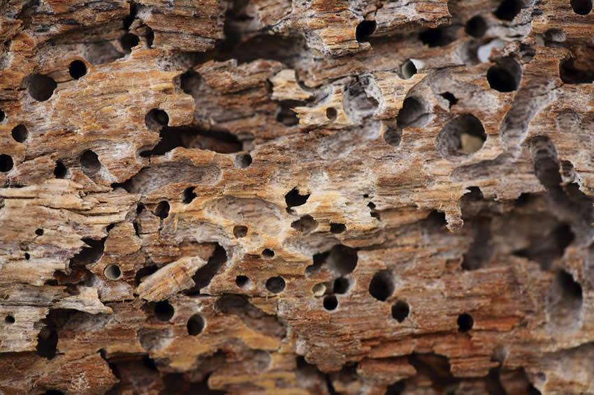 Como acabar com cupim na madeira: 4 dicas
