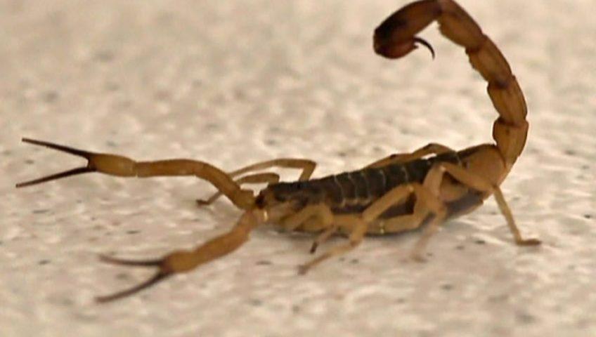 Como evitar escorpião