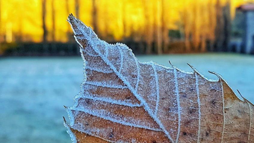 Pragas Urbanas no Inverno