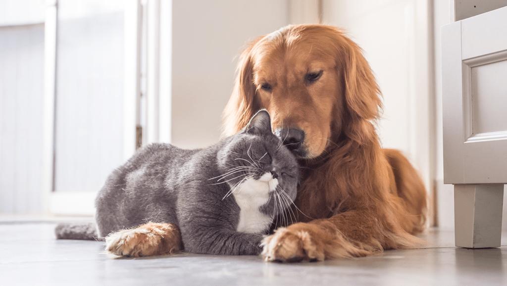 Dedetização com animais de estimação