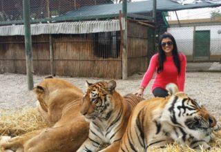 Zoológico Luján Argentina: como chegar, preços, horários