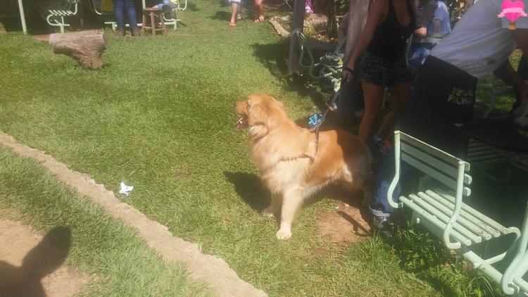 casa-branca-mg-com-cachorro