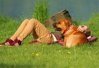 Viagens Pets Friendly- Melhores dicas aqui!