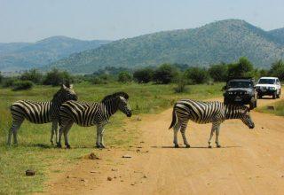 Um dia de Safári na África do Sul em Pilanesberg Park