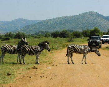 parque-pilanesberg-africa-sul