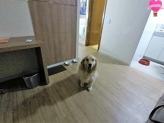 amsterda-apart-hotel-montes-claros-pet-friendly-cachorro-viagem