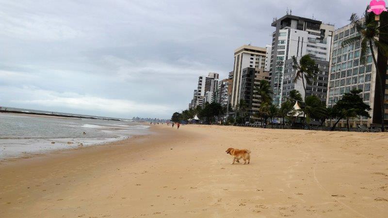 albergue-pousada-estacao-mangue-recife-pernambuco-boa-viagem-cachorro-pet-frindly