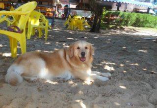 Dois dias em João Pessoa com cachorro, o que fazer, onde ficar, principais atrações: dicas pet friendly