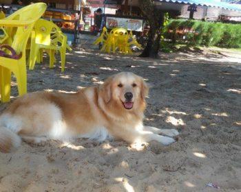 praia-joao-pessoa-pernambuco-cachorro-viagem