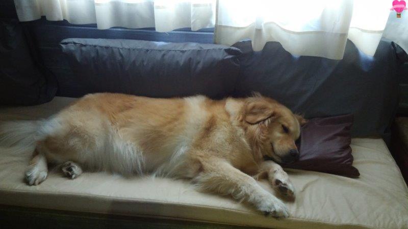 natal-nordeste-rota-sol-cachorro-pet-friendlt