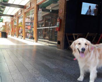itaipava-rio-de-janeiro-cachorro-pet-friendly-dicas-viagem
