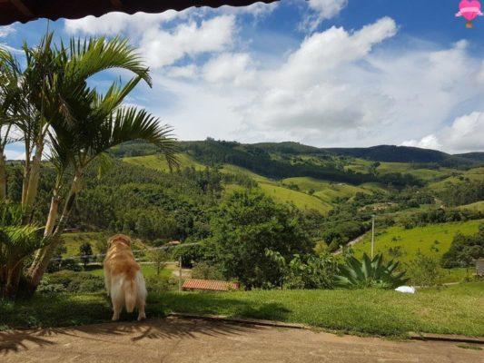 cachaçaria-santo-me-socorro-sao-paulo-pet-friendly-golden-retriever-cachorro