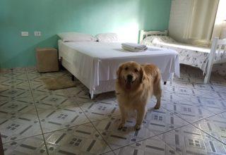 Hospedagem Pet friendly em Socorro (SP)- Viagem com cachorro