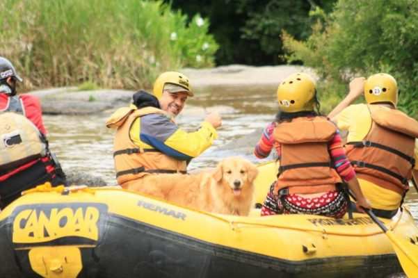 rafiting-dog-socorro-sao-paulo-cachorro-golden-retriever
