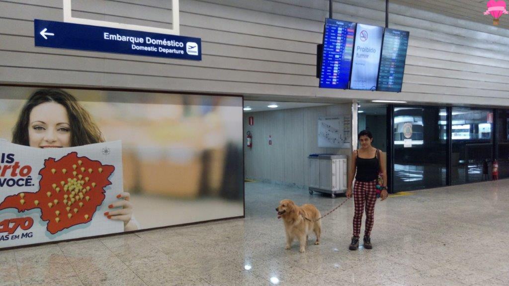 passaporte-brasileiro-caes-gatos-animal