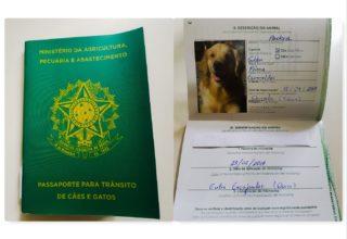 Como tirar o Passaporte brasileiro para cães e gatos? Passo a Passo