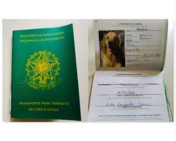 passaporte-cachorro-animal-viagem