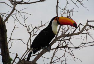 Dica de hospedagem no Pantanal – Pousada Aguapé