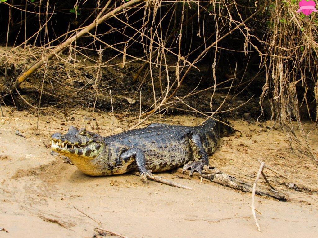 pantanal-passeio-barco-rio-aquidauana