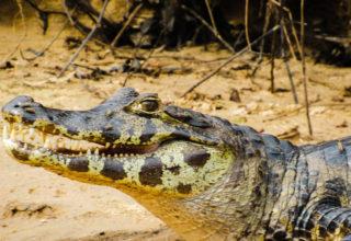 3 dias no Pantanal (MS) Dicas de Passeios