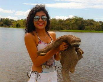 bicho-preguica-manaus-amazonas