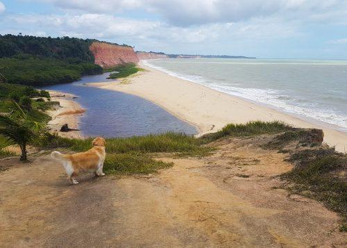 praia-japara-grande-prado-cachorro