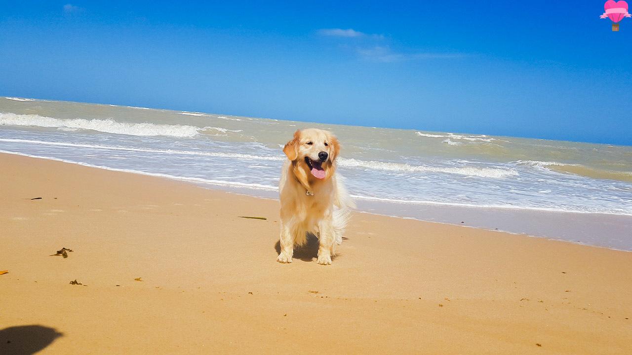 praia-paixao-prado-cachorro-pet-friendly
