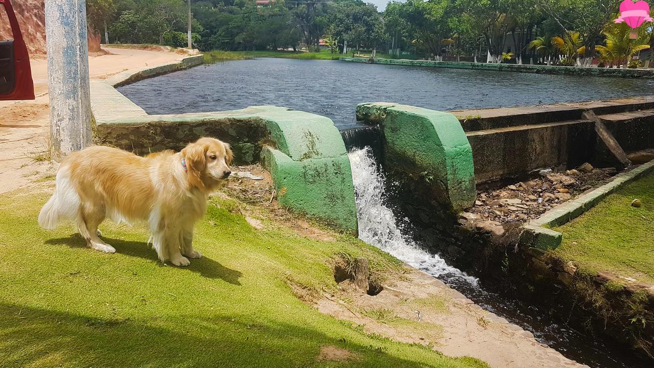 rio-cumuruxatiba-bahia-viagem-cachorro