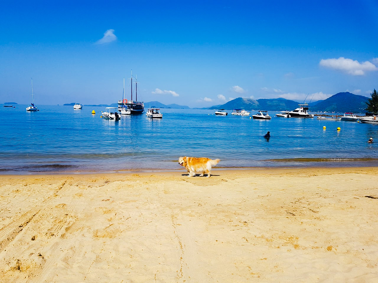 praia-biscaia-angra-cachorro-pet-friendly