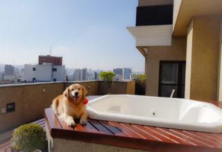 Hospedagem pet friendly em São Paulo: Hotel Tryp Jesuíno Arruda