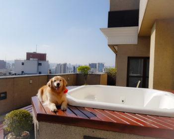 hotel-jesuino-arruda-sp-pet-friendly