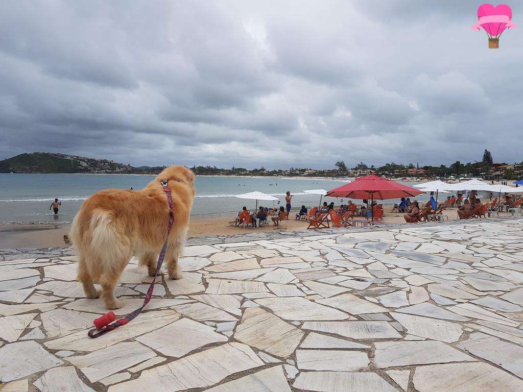praia-ferradurinha-buzio-pet-friendly