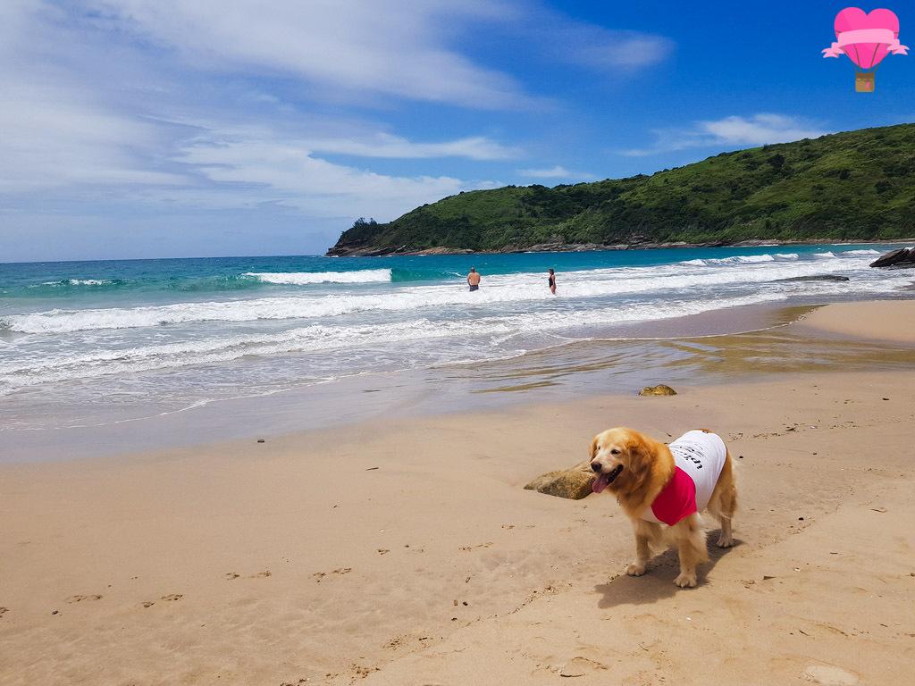 praia-brava-buzios-petfriendly