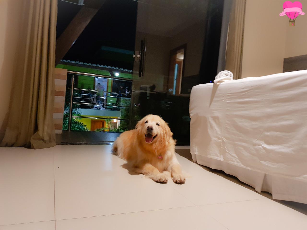 hospedagem-pet-friendly-porto-seguro
