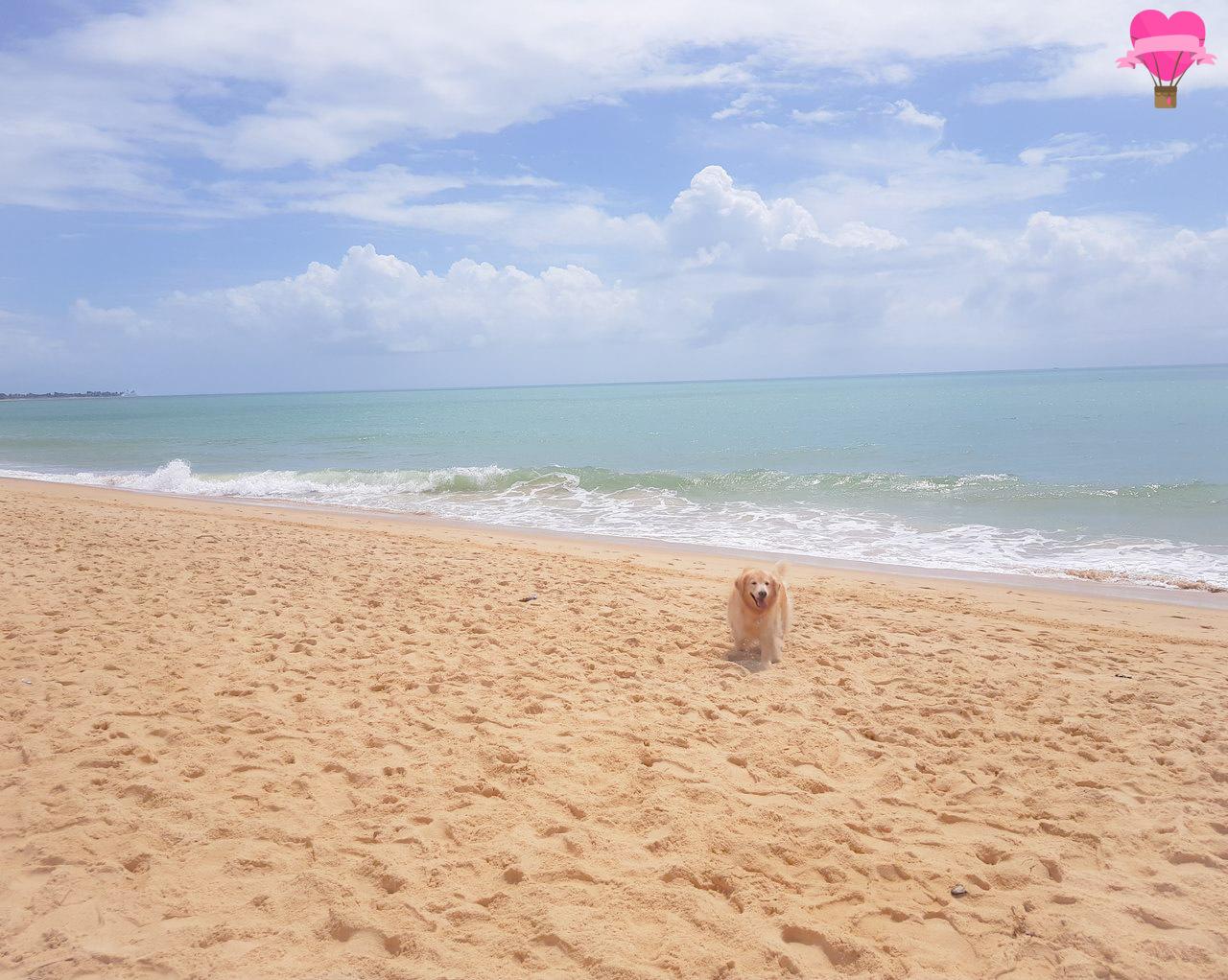praia-taperapua-porto-seguro-pet-friendly