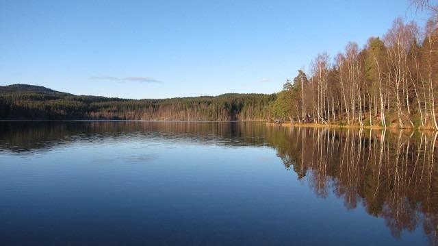 florestas da noruega