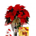 Poinsettia Wine & Panettone