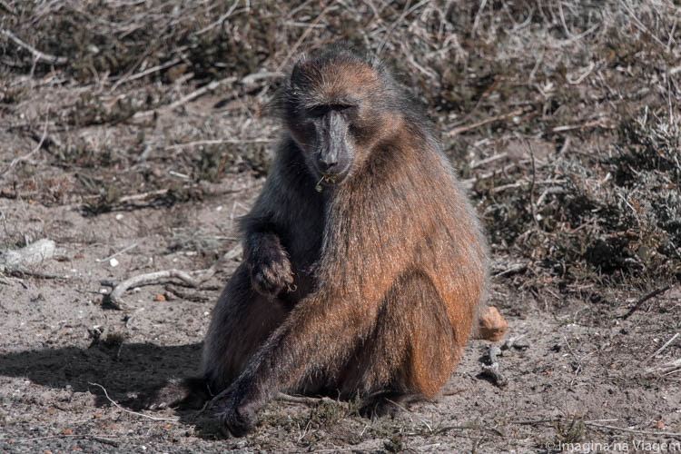 Porque escolhi não fazer Safari na África do Sul. Foto: © Imagina na Viagem