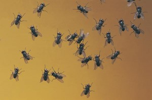 como usar fly em Iglês