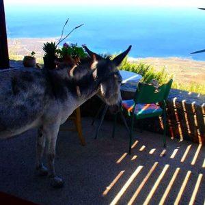 burro na sombra em inglês