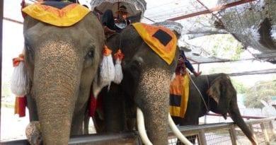 o que nao te contaram sobre a tailandia - transito - turismo exploratorio - zoologico - mulheres girafa - elefantes - poluicao - drogas (