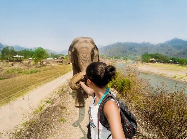 motivos para viajar para a tailandia - elefantes