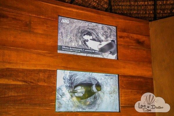 parque das aves - foz do iguacu - cataratas - parana - preservacao - mata atlantica (1)