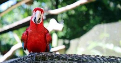 Parque das Aves – Um Santuário de Preservação em Foz do Iguaçu