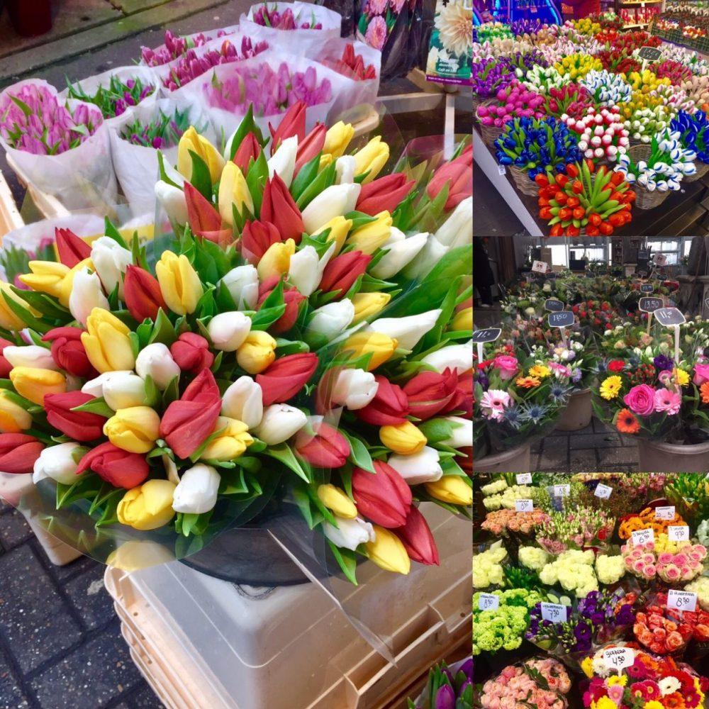 flores da holanda